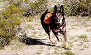 Lupo fue el primer perro de rescate que tuvo el país